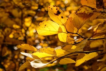 arboretum-0251