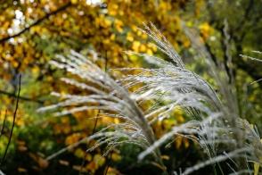 arboretum-0286